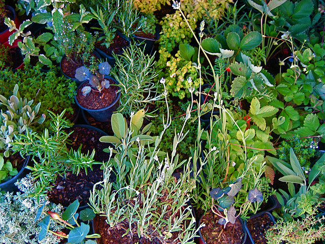 the-sitric-garden