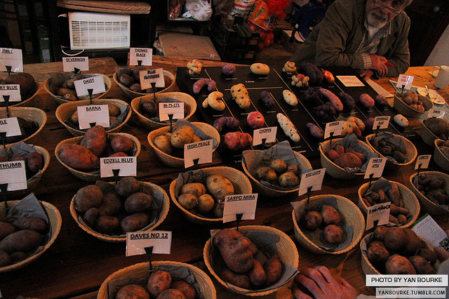 spuds-selection